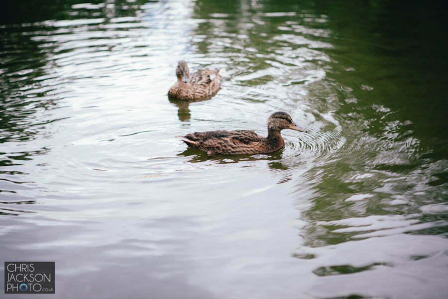park, ducks, stockport, bramall hall